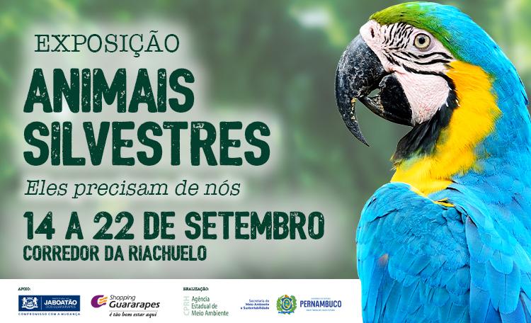 Guararapes Recebe Exposição de Animais Silvestres